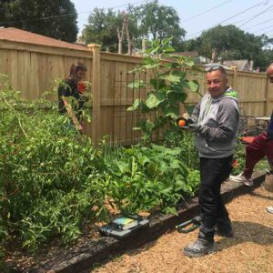 Eddie Beard Vet House project healthy vegetables rip for the picking and eating