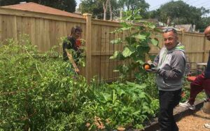 EBVH project healthy vegetable ripe for the picking and eating